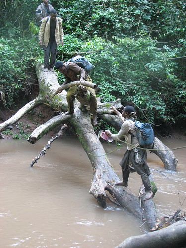 negotiating a river with ivory
