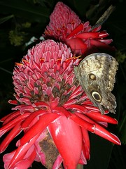 La mas Bella sobre la Flor (Cristina Bruseghini de Di Maggio) Tags: mariposas vosplusbellesphotos