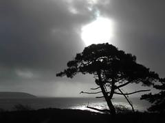 December Sunburst (Trish McGrath) Tags: trees ireland sea beach water landscape sealife hookhead cowexford trishmcgrath