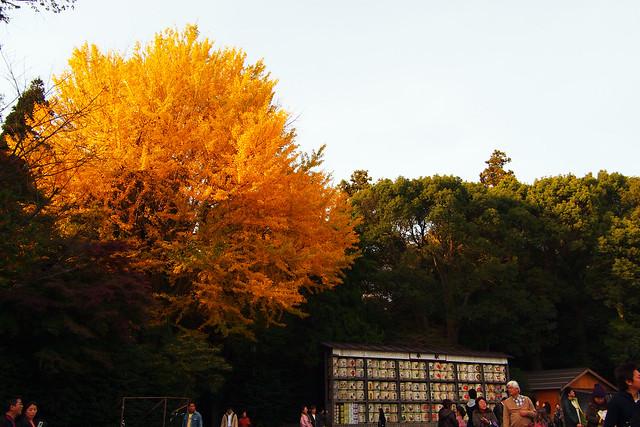 101128_145006_鎌倉_鶴岡八幡宮