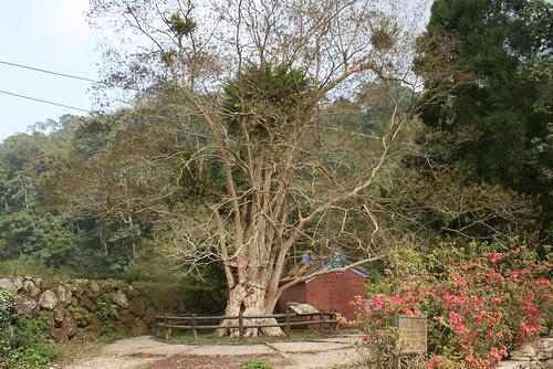 老樹連結我們的生命經驗,巷口旁、廟口邊、旅途中,充滿我們記憶的角落。