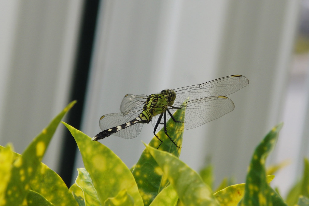 dragonfly at 1/320, f/4.3, 32.6 mm, ISO 100