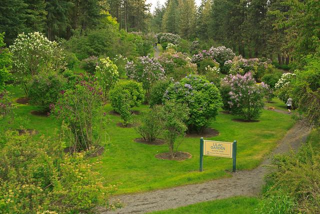 Lilac Gardens at Manito Park