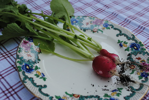 the first crop of radish