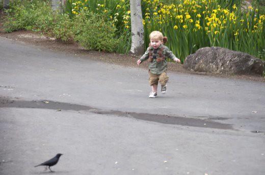 chasingbirds