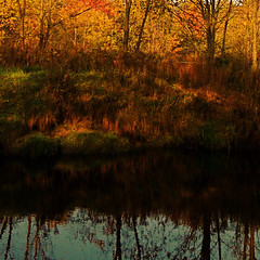 October! / Octobre! (Denis Collette...!!!) Tags: autumn wild fab canada tree automne river u2 death october bravo searchthebest quebec mort mother rivire bono qubec bec marais arbre soe marshland octobre sauvage mre kingdoms takeabow blueribbonwinner firstquality supershot magicdonkey outstandingshots mywinners abigfave worldbest shieldofexcellence platinumphoto anawesomeshot colorphotoaward superbmasterpiece goldenphotographer diamondclassphotographer flickrdiamond megashot excellentphotographerawards flickrelite theunforgettablepictures deniscollette wildriver colourartaward theperfectphotographer theroadtoheaven world100f