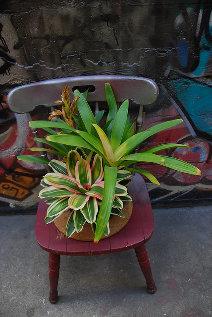plant on a chair