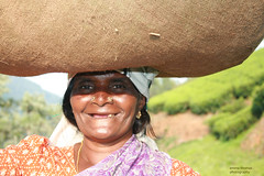 nose rings (emma2thomas) Tags: india tea harvest jewelry noserings endoftheday indianfaces teaplucker diamondclassphotographer 50millionmissingwomen noseringthefeminine