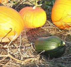 Pumpkins 17