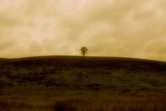 a lonely tree (alternativefocus) Tags: tree pentax yorkshire dreamy yorkshiredales alonelytree pentaxk10d alternativefocus
