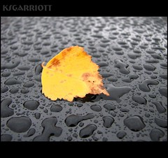 fall (KSGarriott) Tags: autumn black macro fall nature wet water car rain yellow canon droplets leaf drops vegitation naturesfinest supershot canonpowershots3is colorphotoaward onlyyourbestshots ksgarriott scottgarriott