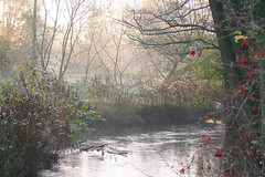 Autumn Morning ([klauspeter]) Tags: autumn mist fog creek canon 300d beck herbst bach brook digitalrebel veerse dunst scheeel klauspeter kirchsteg