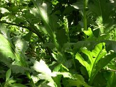 ortobotanico 206 (blum1) Tags: alberi fiori piante ortobotanico