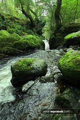 White water and mossy rocks (wprasek) Tags: uk england white plant color colour green nature wet water ecology rock stone creek forest woodland river flow moss woods scenery rocks whitewater stream stones timber smooth lakedistrict pebbles rapids growth pebble land vegetation environment lichen wilderness powerful environmentalism mossy damp turbulence timberland ecosystem moist trickle turbulent fastflowing dockray foliolandscapes warrenprasek airaforcewaterfall xoodu wprasek wwwxooducom wwwwprasekcom