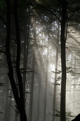 Forest Dawn (beshanti2) Tags: morning light forest dawn spiritual shanti absolutelystunningscapes ljomicomp6