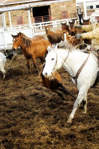 gathering mares 214