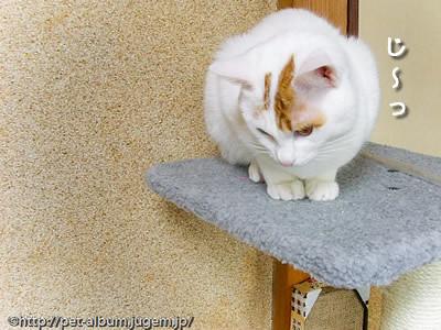 ミア(猫)の写真10