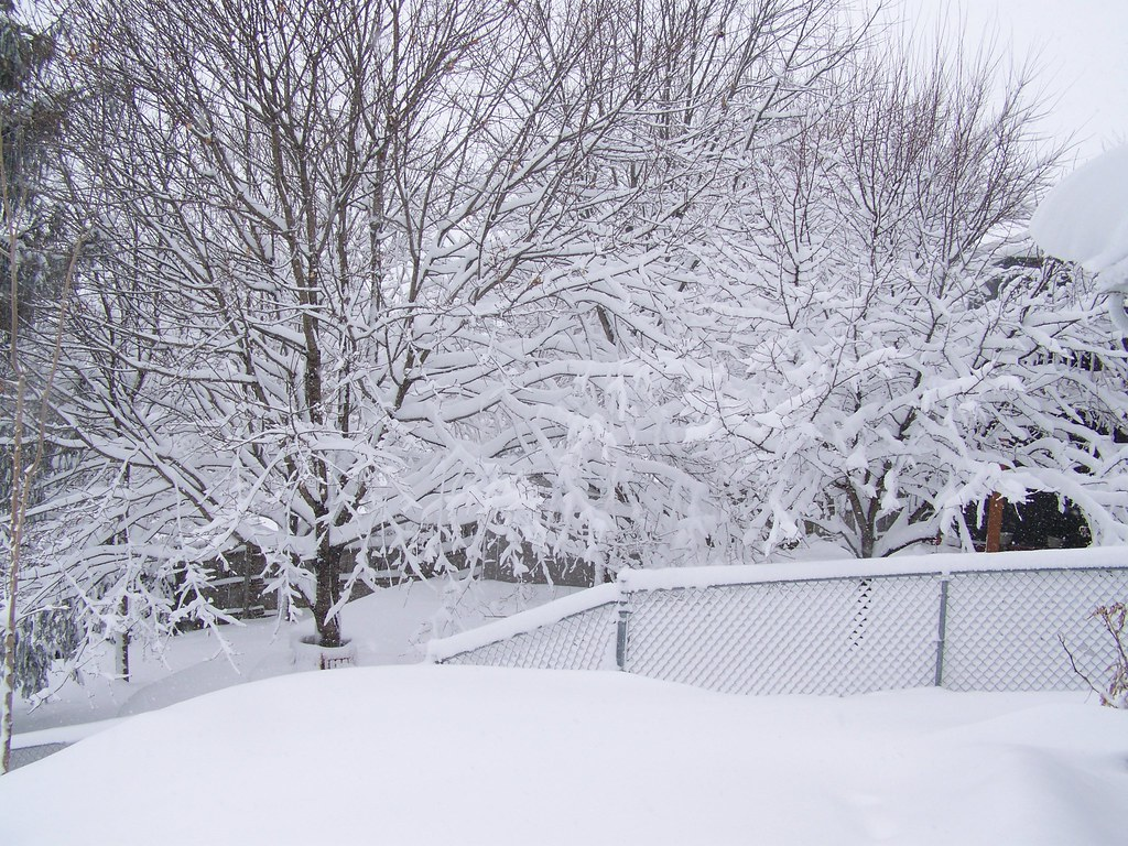 winter08-4