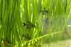 (Juavenita ♥) Tags: fish photography aquarium photo image lanka srilanka jua juavenita kalaniya