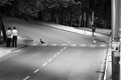 (LastAvalon) Tags: ducks patos santiagocompostela tvw