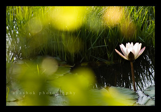 My Bloom @ Better Photography Magazine