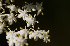 Grace that life redeems (labareda photo) Tags: flowers light macro little grace