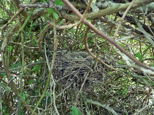 nidos de aves impresionantes