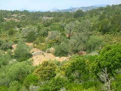 Sur la piste montant aux Tre Padule : les ruines de Campu Celi (nom IGN)