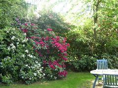 Fühling im Garten