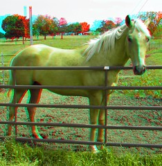 Cheerio (Anaglyph 3D) (patrick.swinnea) Tags: horse oklahoma animal stereoscopic stereophoto 3d anaglyph pasture