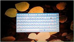 Use screen keyboard (Hamid. M.) Tags: yahoo google internet mazandaran worry secure msn esfahan aol gilan ahvaz tabriz ardebil mashad    internetiniran flickriniran