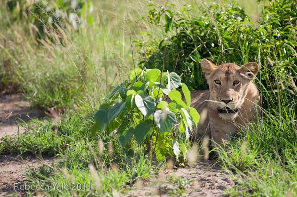 RYALE_Rwanda_Uganda_Safari-322