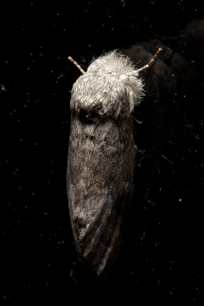 Unidentified Moth #2