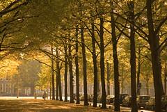 A perfect autumn Sunday (berik) Tags: autumn trees raw glow nef w