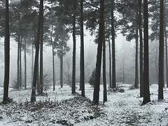 Snow in the Chilterns (algo) Tags: wood trees england mist snow misty fog forest photography interestingness topf50 bravo topv1111 topv222 explore algo topf100 100f chilternforest supershot magicdonkey 25faves explore123 71209 200750plusfaves fiveflickrfavs