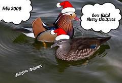 Pato-mandarim ( Aix galericulata ) (Joaquim Antunes) Tags: duck fdsflickrtoys pato aixgalericulata boasfestas mywinners patomandarim