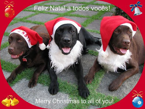 chocolate and black labs - Christmas