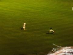 P5220015 (justgrimes) Tags: japan baseball tigers hanshin