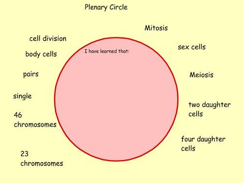 Plenary Circle