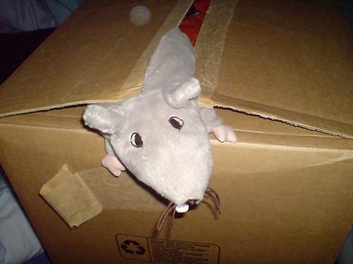Toilet Rat Has Escaped!!