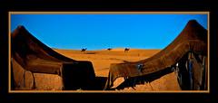 Jour de Noël 2008 dans le Sahara (guerriere) Tags: morocco groovygang