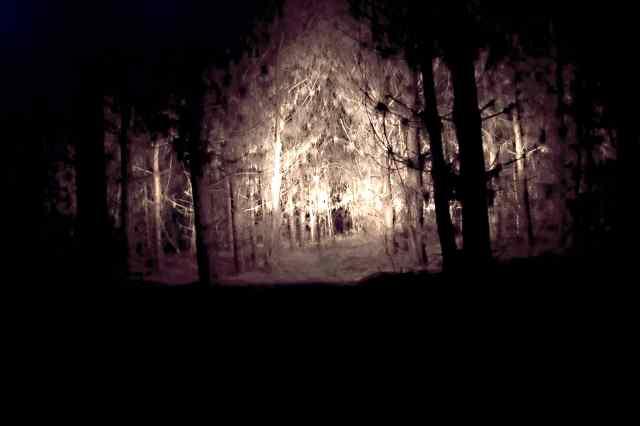 01_Forest-coridor_DSC_1355