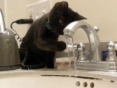 080130 moxie sink