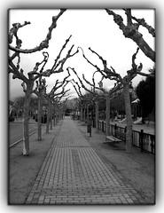 Avenida del Ferrocarril