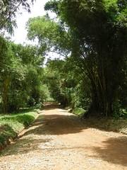 Allées des bambous