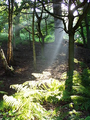 Morning sunlight through trees (Margaret Stranks) Tags: uk trees sunlight oxford shotover