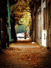 El buzón del fondo (Lolo · 100x100) Tags: hojas buenosaires árboles ciudad guillermo otoño autos lolo casas agustin vereda buzón pizarro secas 100x100 guillermopizarro guillermoagustinpizarro lolo100x100