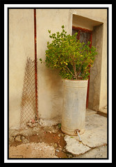 practical flower pot (-Filippos-) Tags: plant village cyprus     92007  evrychou