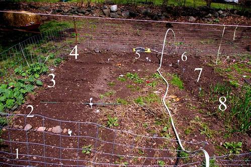garden 08 005