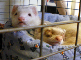 Buddy and Button March 2008